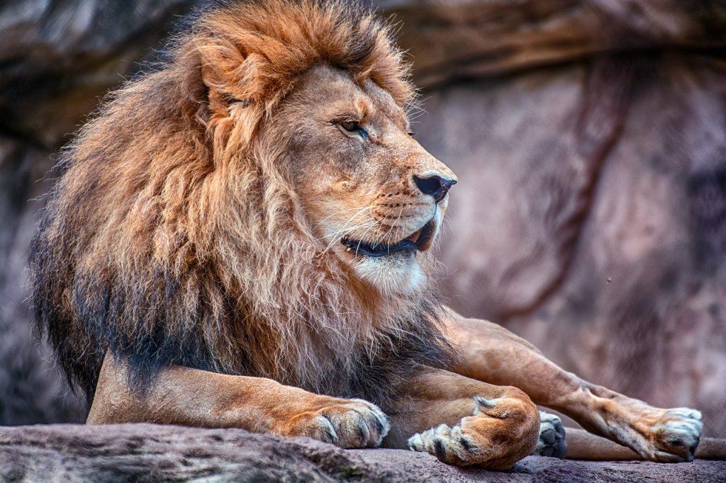 lion zoo de mervent vendee