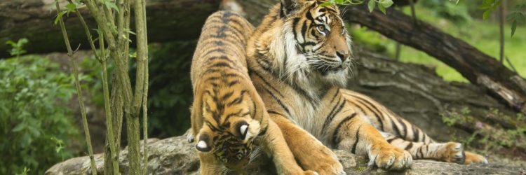Venez visiter le zoo de Doué-la-Fontaine et réservez votre hôtel dans la région