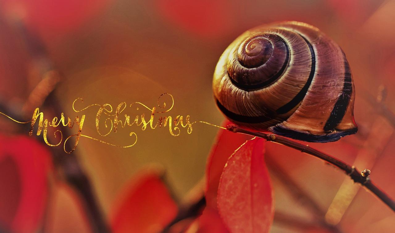 Découvrez les escargots de Maison Royer