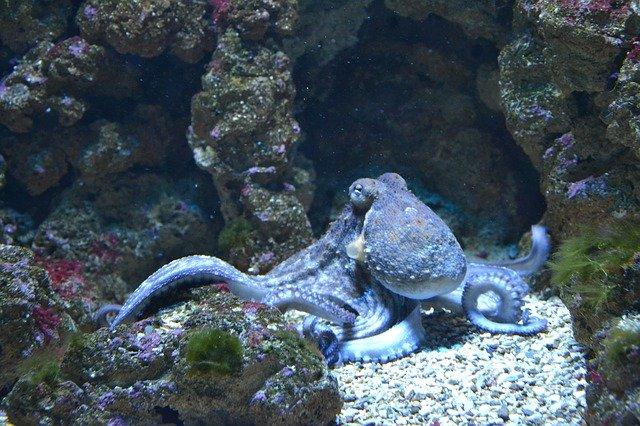 Réserver les places pour l'aquarium de Vendée