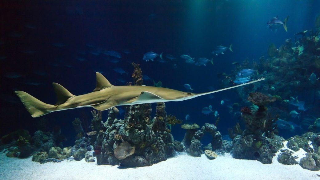 Découvrir l'aquarium de Talmont Saint-Hilaire