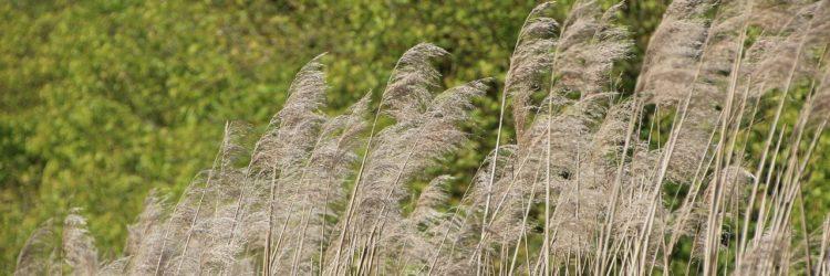 La faune et la flore du marais poitevin
