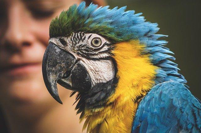 animaux liberte zoo